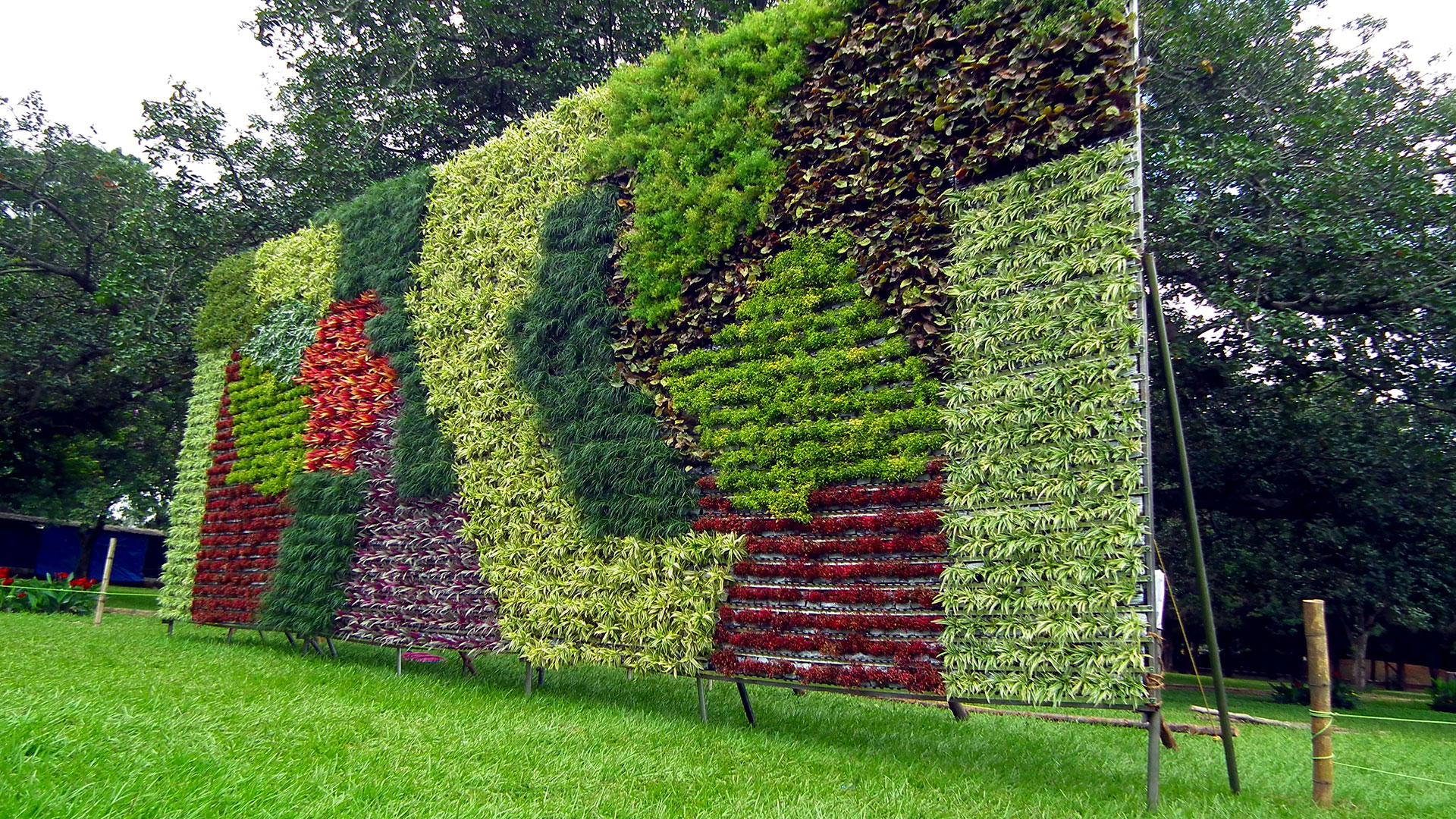 Jardines verticales y muros verdes acuarios naturales for Plantas usadas para jardines verticales