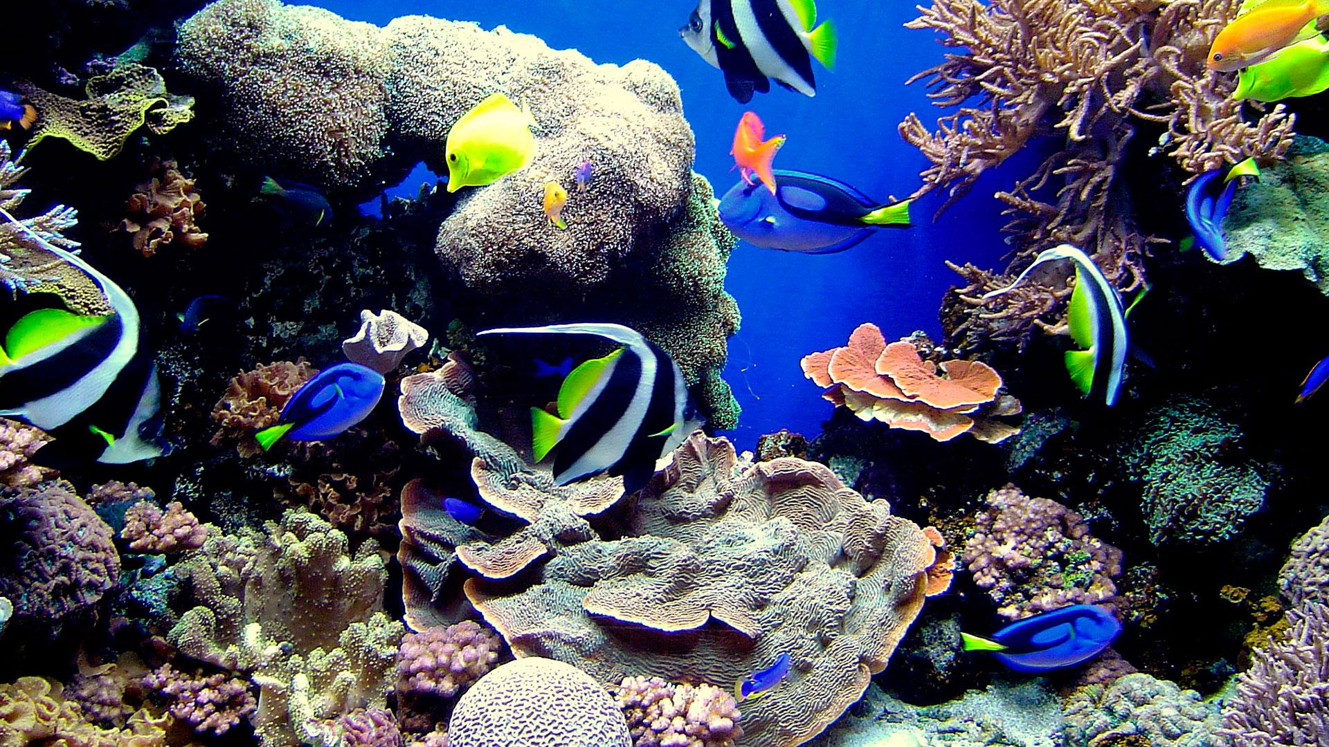Acuarios marinos o de arrecife acuarios naturales for Peces ornamentales acuarios